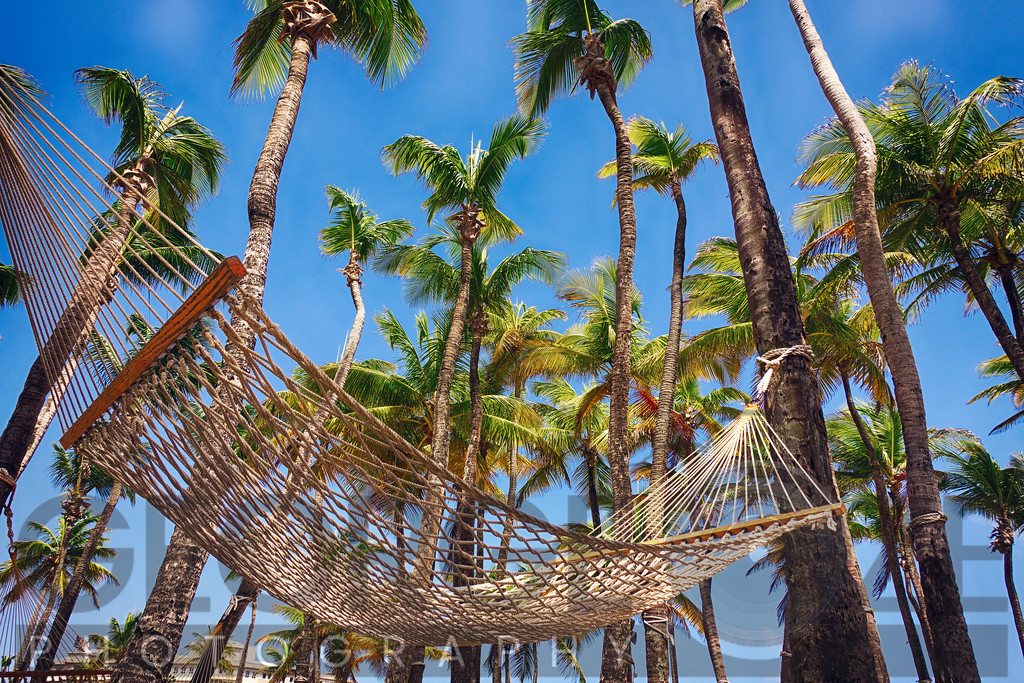 Hammock in a Palm Grove