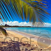 Palm Tree Cast a Shadow on a Caribbean Beach, Vacia Telaga Beach, Puerto Rico