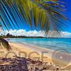 Palm Tree Cast a Shadow on a Caribbean Beach, Vacia Telaga Beach, Puerto Rico