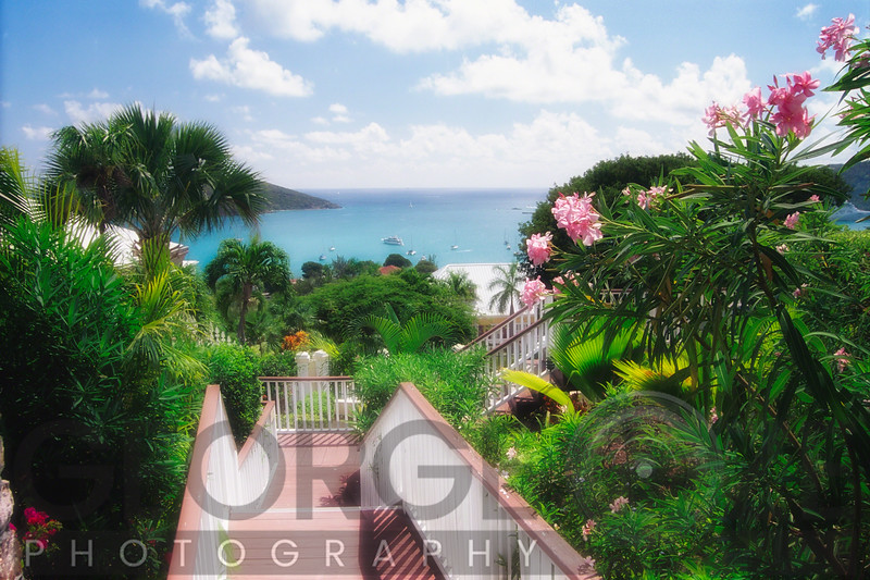 High Angle View of St Thomas Harbor from a Garden, Charlotte Amalie, US Virgin Islands