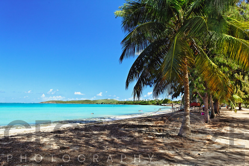 Palm Trees on the Seven Seas Beach, Fajardo, Puerto Rico