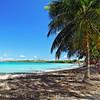 Palm Trees on the Seven Seas Beach, Fajardo, Puerto Rico