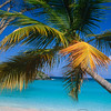 Palm Tree on a Caribbean Beach, Trunk Bay, St John, US Virgin Islands