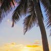 Sunset Stroll on the Seven Miles Beach, Cayman Islands