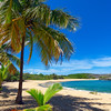 Palm Tree in a Protected Small Bay, Manati, Puerto Rico