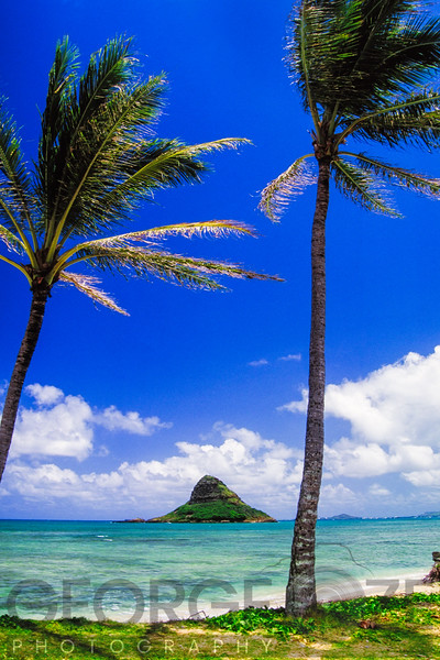 The Chinaman's Hat And Palm Trees, Hawaii