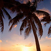 Sunset with a Palm Tree on The Seven Miles Beach,Grand Cayman