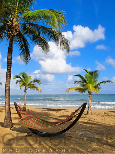 Hammock on a Palm Covered Beach, Isla Verde, Puerto Rico
