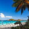 Beach View from Under a Palm Tree, Trunk Bay, St John, US Virgin Islands