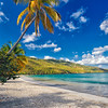 Palm Tree on a Caribbean Beach, Magens Bay , St. Thomas, US Virgin Islands