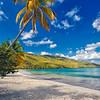 Palm Tree on a Caribbean Beach, Magens Bay , St. Thomas, US Virgin Islands