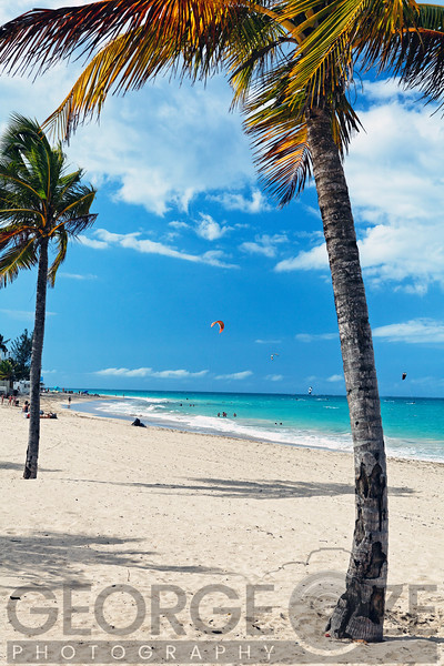 Palm Trees on Ocean Park Beach, San Juan, Puerto Rico
