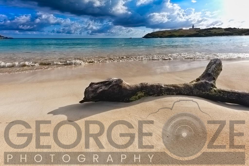 Driftwood on a Caribbean Beach, Playa Sucia, Cabo rojo, Puerto Rico