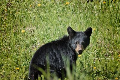 Bears_052817_9844 web