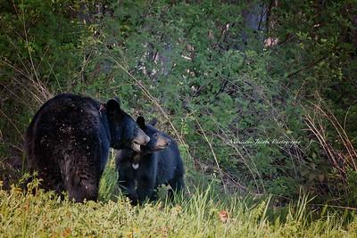 Bears_052817_9971 web