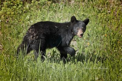 Bears_052817_9893 web