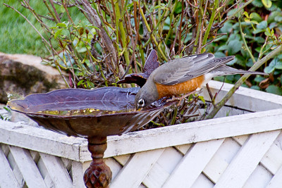 Backyard_Birds-15.jpg
