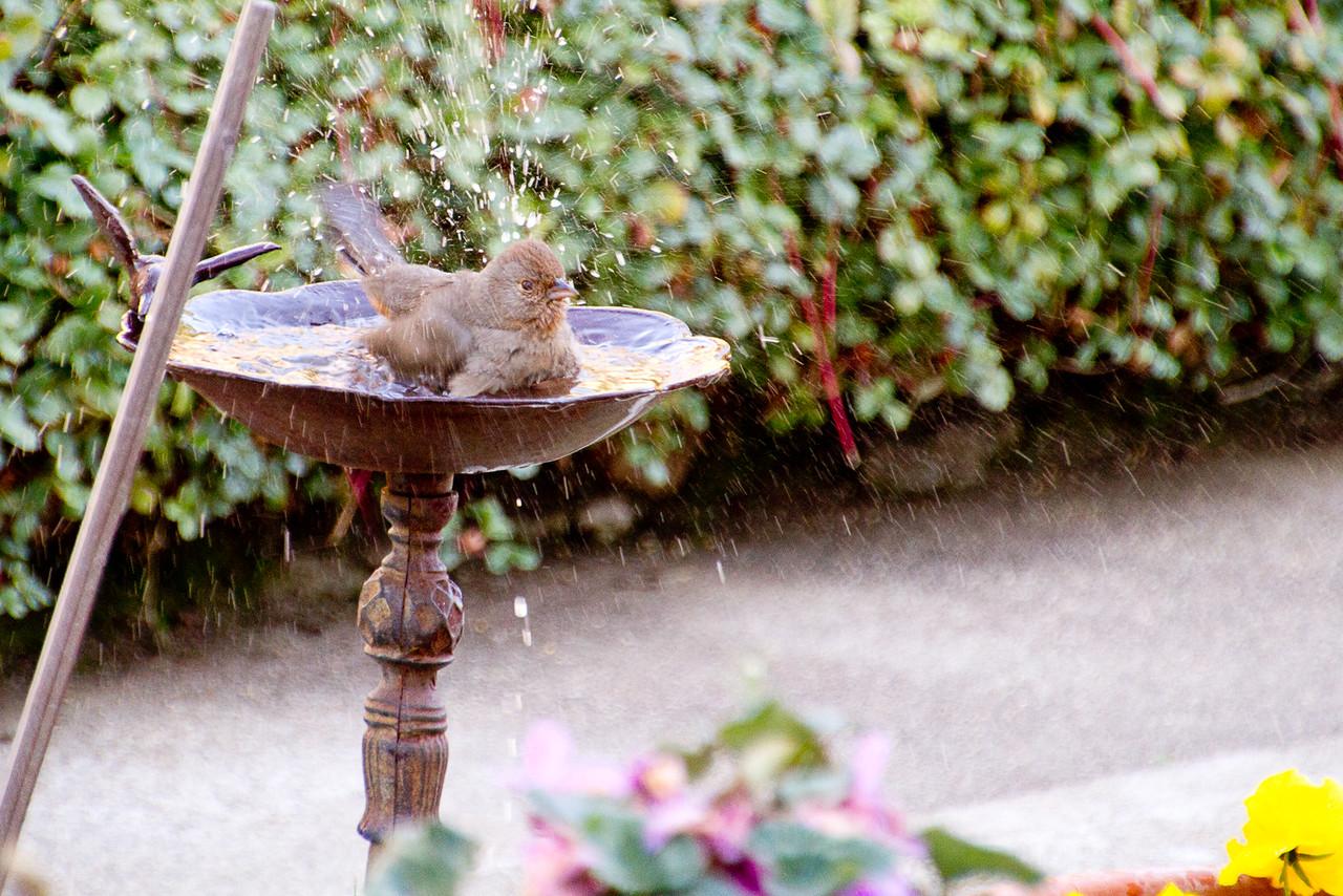 Backyard_Birds-13.jpg