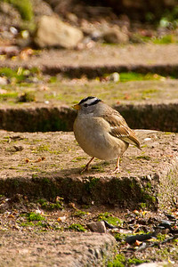 Backyard_Birds-Mar2012-21.jpg