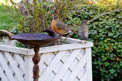 Backyard_Birds-17.jpg