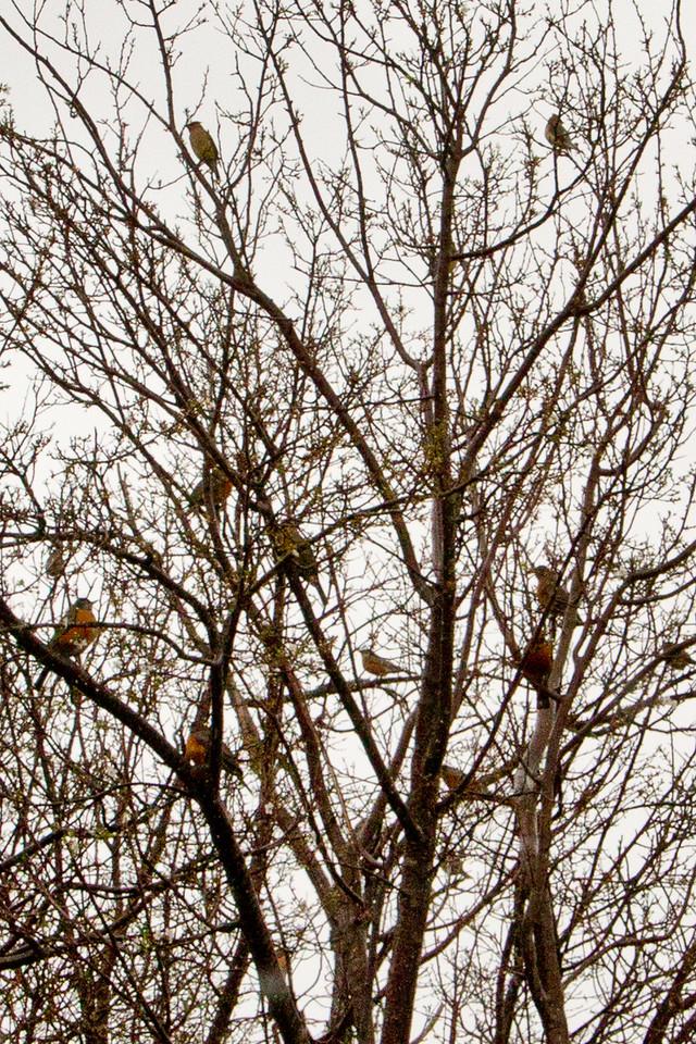 Backyard_Birds-05.jpg