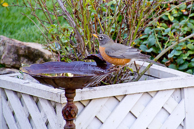 Backyard_Birds-16.jpg