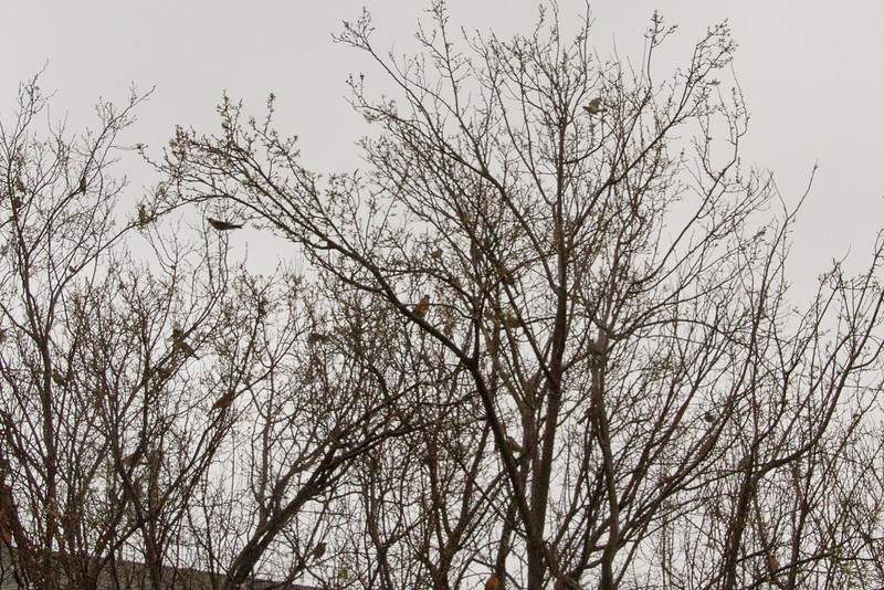 Backyard_Birds-02.jpg