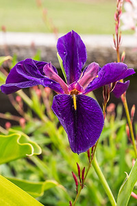 backyard_flowers-13.jpg