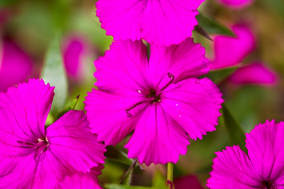 backyard_flowers-09.jpg