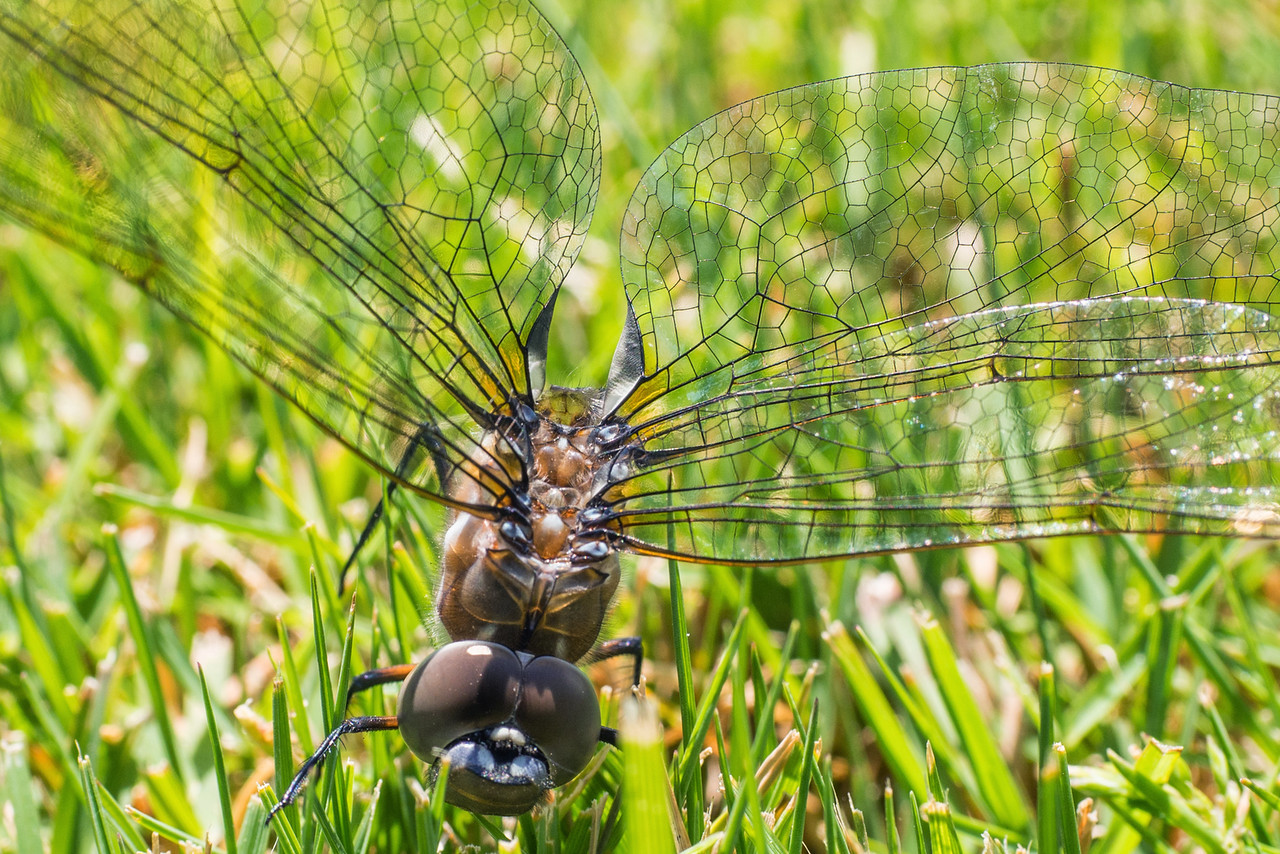 dragonfly?-04.jpg