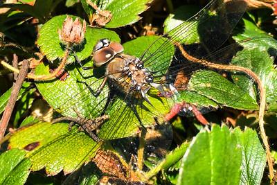 dragonfly?-01.jpg