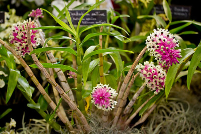 SF_Orchid_Show-17.jpg