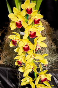 SF_Orchid_Show-26.jpg
