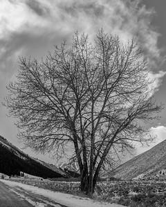 Cottonwood, Trail Creek, Sun Valley, Idaho