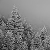 Hoarfrost on Fir Trees, Sun Valley, Idaho