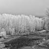 Hoarfrost on the Big Wood River, Idaho