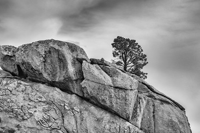 Lone Pine, City of Rocks National Reserve