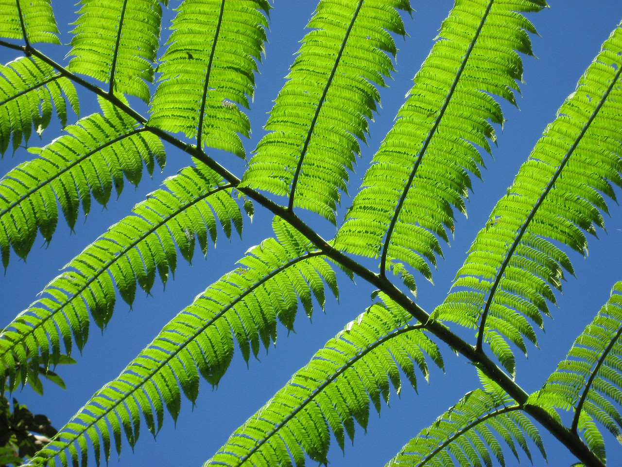 Here's another photo taken by Lynn of a fern leaf against a very blue sky