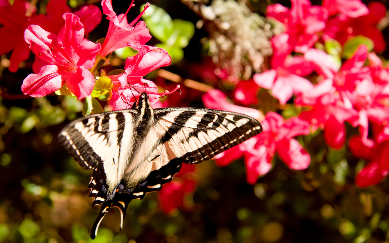 Bob got lucky and snapped this great photo of a butterfly at Filoli Gardens
