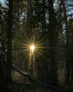 Sunburst In the Afternoon Forest