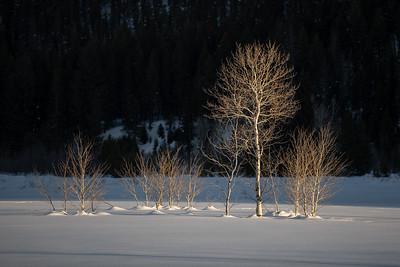 Last Light, Aspens, Boulder Mountains, Idaho