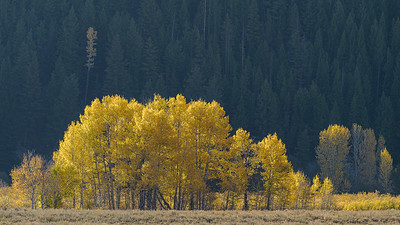Fall Trees Sawtooth National Recreation Area
