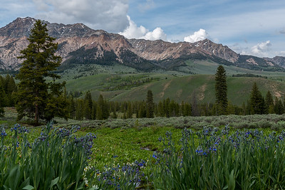 Idaho Bluebells and the Boulder Mountains