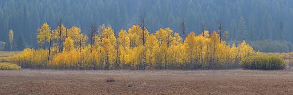 Fall Aspens Sawtooth National Recreation Area