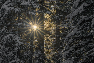 Sunburst Snowy Trees