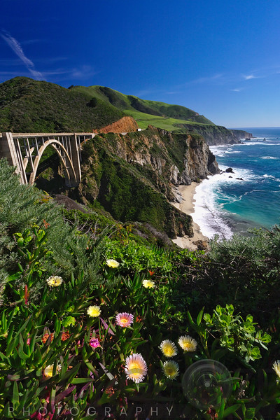 Wildflower Bloom at the Bixby Bridge, Big Sur Coast, California