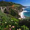 Wildflower Bloom at the Bixby Bridge, Big Sur Coast, California