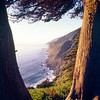Coastal View Between Trees, Ragged Point, Big Sur Coast California