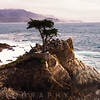 Coastal View of a Lone Cypress Tree, Seventeen Mile Drive, Monterey Peninsula, California