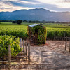 Napa Valley Vineyard with a Small Shed, Oakville, California